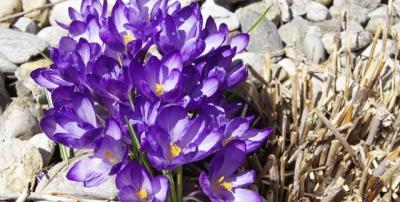 Frühlingswoche